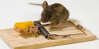 Cara Membuat Perangkap Tikus Elektrik