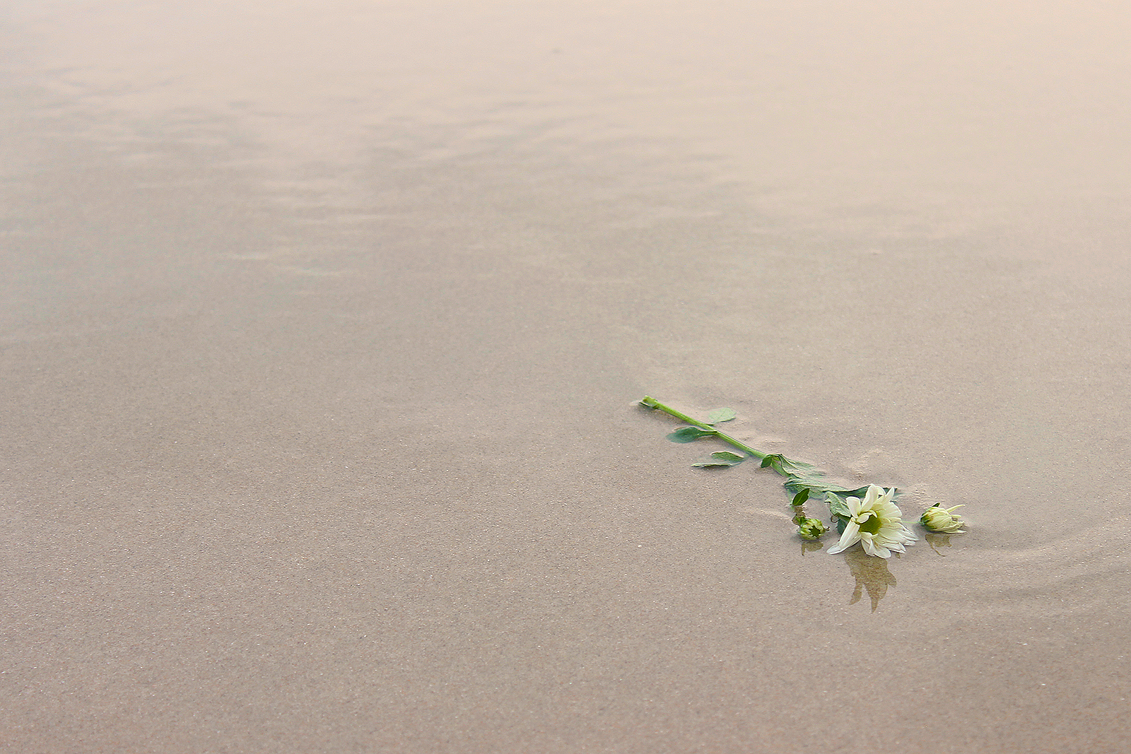 flor molhada areia praia