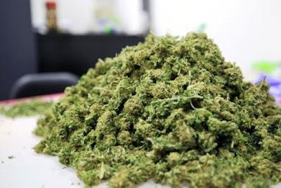 Venta de marihuana en Uruguay reduce en un 18% el narcotráfico