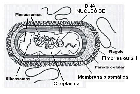 Blogdaanabeatriz Anatomia Celular E Fisiologia