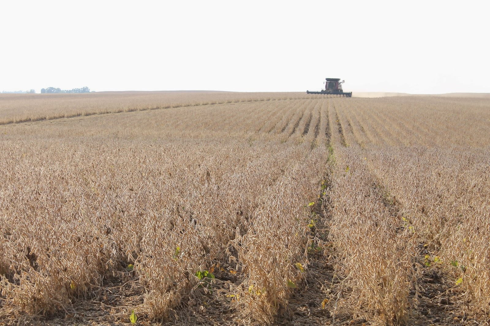 31 Days from a Tractor Seat - Soybean Harvest