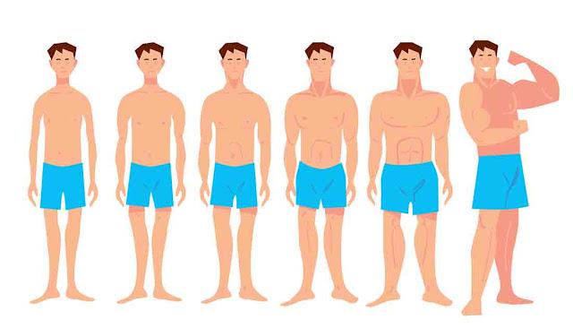طريقة تسمين الجسم النحيف