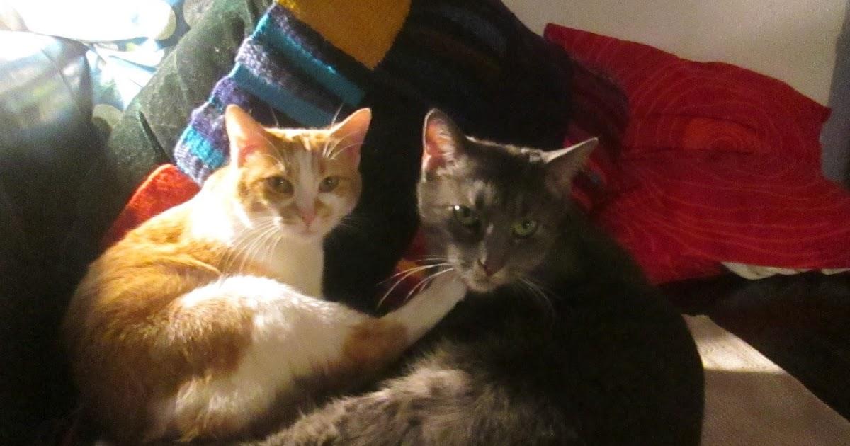 kokelores kunst kitsch katzen die lasermaus wie man katzen in den wahnsinn treibt. Black Bedroom Furniture Sets. Home Design Ideas
