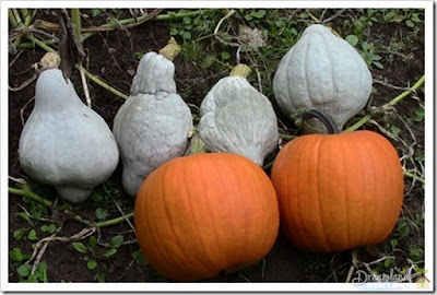 Going To Cook Up A Winter Squash