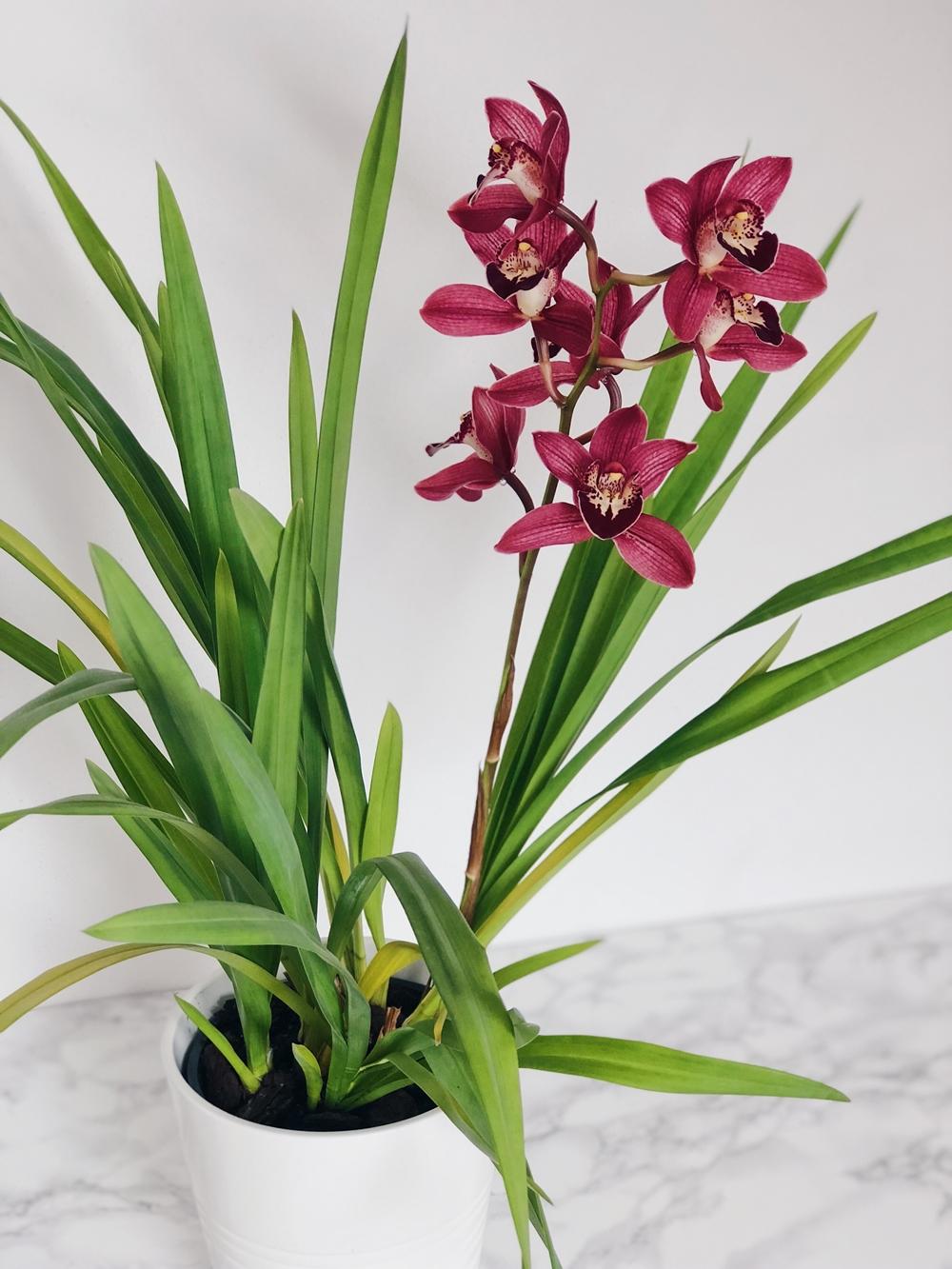 zimmerpflanzen f r pralle sonne ostseesuche com. Black Bedroom Furniture Sets. Home Design Ideas