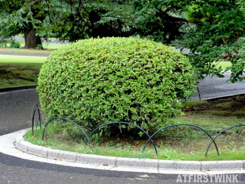 Shinjuku Gyoen 新宿御苑 shaped bush