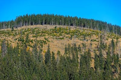 erdőirtás, környezetvédelem, klímaváltozás, Áder János, Erdészeti Lapok,