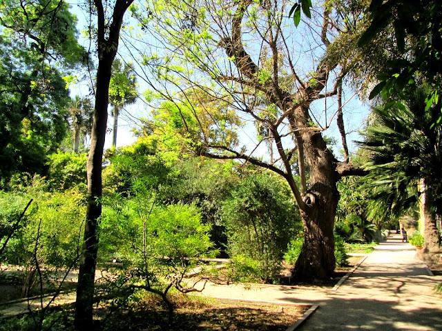 Un día de primavera en el Jardín Botánico de Valencia, abril 2014 - Paseos Fotográficos Valencia