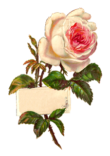 stock rose label image