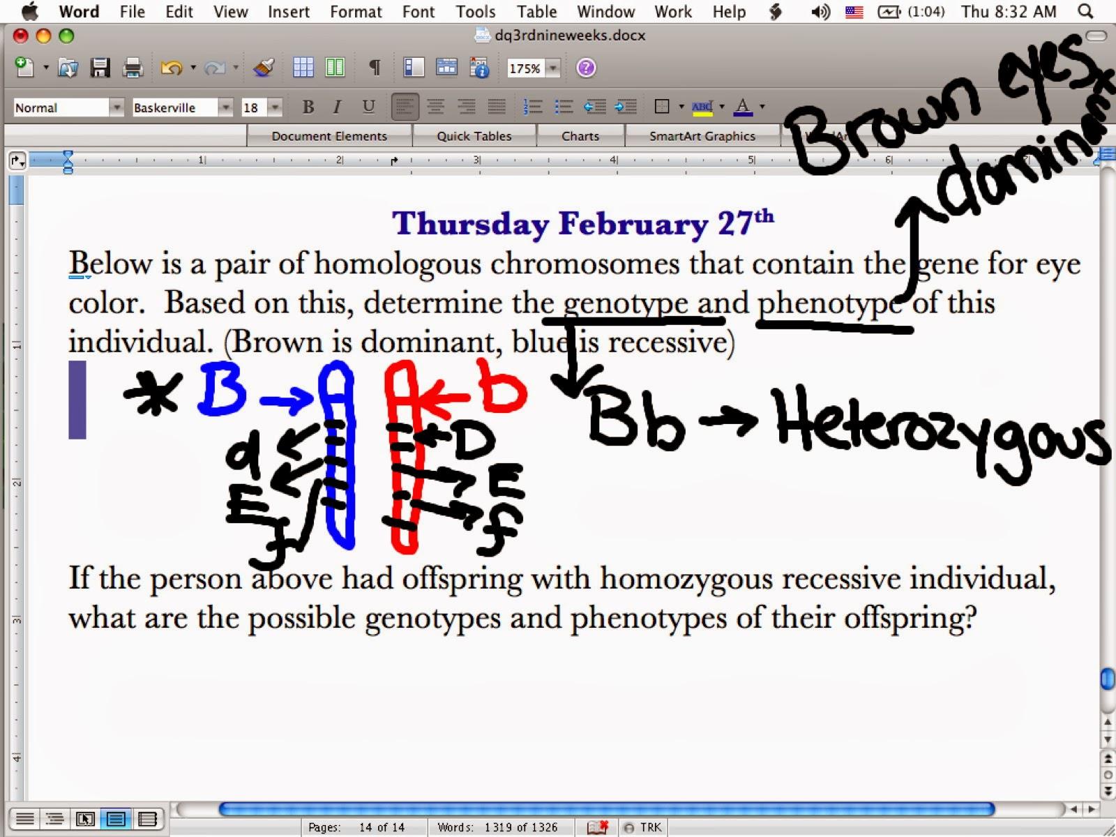 Ec Honors Biology Homozygous Heterozygous Genotype