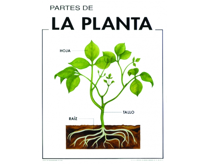 Se o emely pt partes de la planta - Cuales son las plantas con flores ...