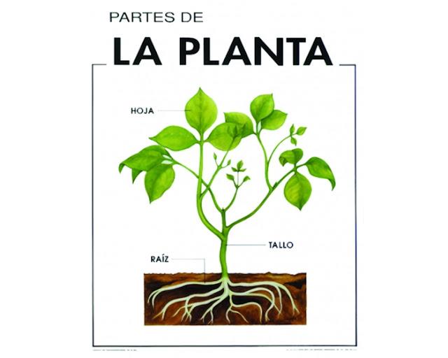 Se o emely pt partes de la planta for Cuales son las partes de un arbol