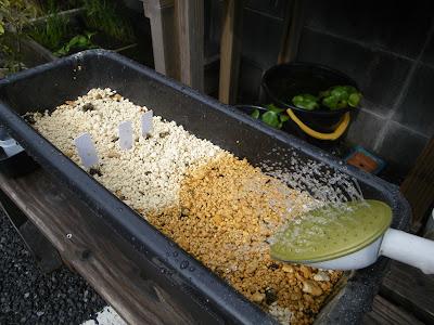 種蒔き 水遣り