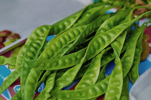 12 Reasons Why Petai is the Most Sought Vegetable in the Future
