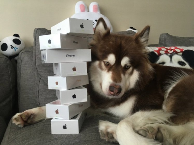 chinese millionaire buys 8 iPhone7 For Dog