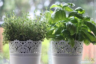 Herbs, Thyme, Basil