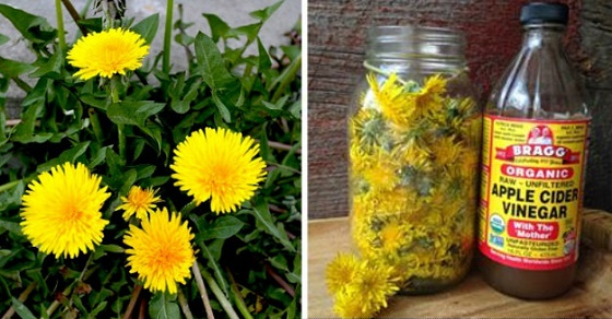 24 Little-Known Uses For Dandelions From Baking & Pain RELIEF To Quickly Removing Warts