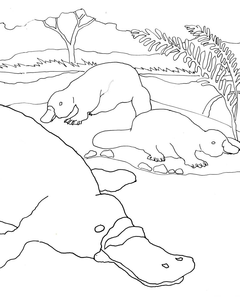 Caroline arnold art and books for Duckbill platypus coloring page