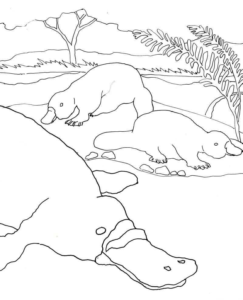 Platypus Coloring Page - Arenda-stroy