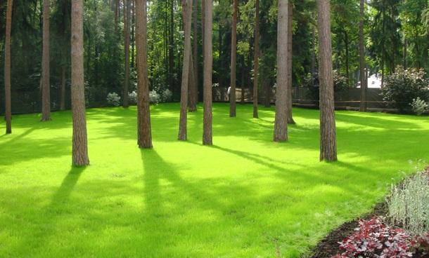 газон среди деревьев