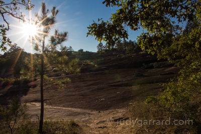 Sunflare Tree