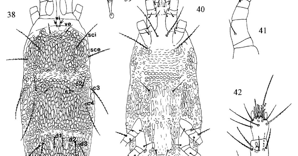 Variety of Life: Tetranychoidea