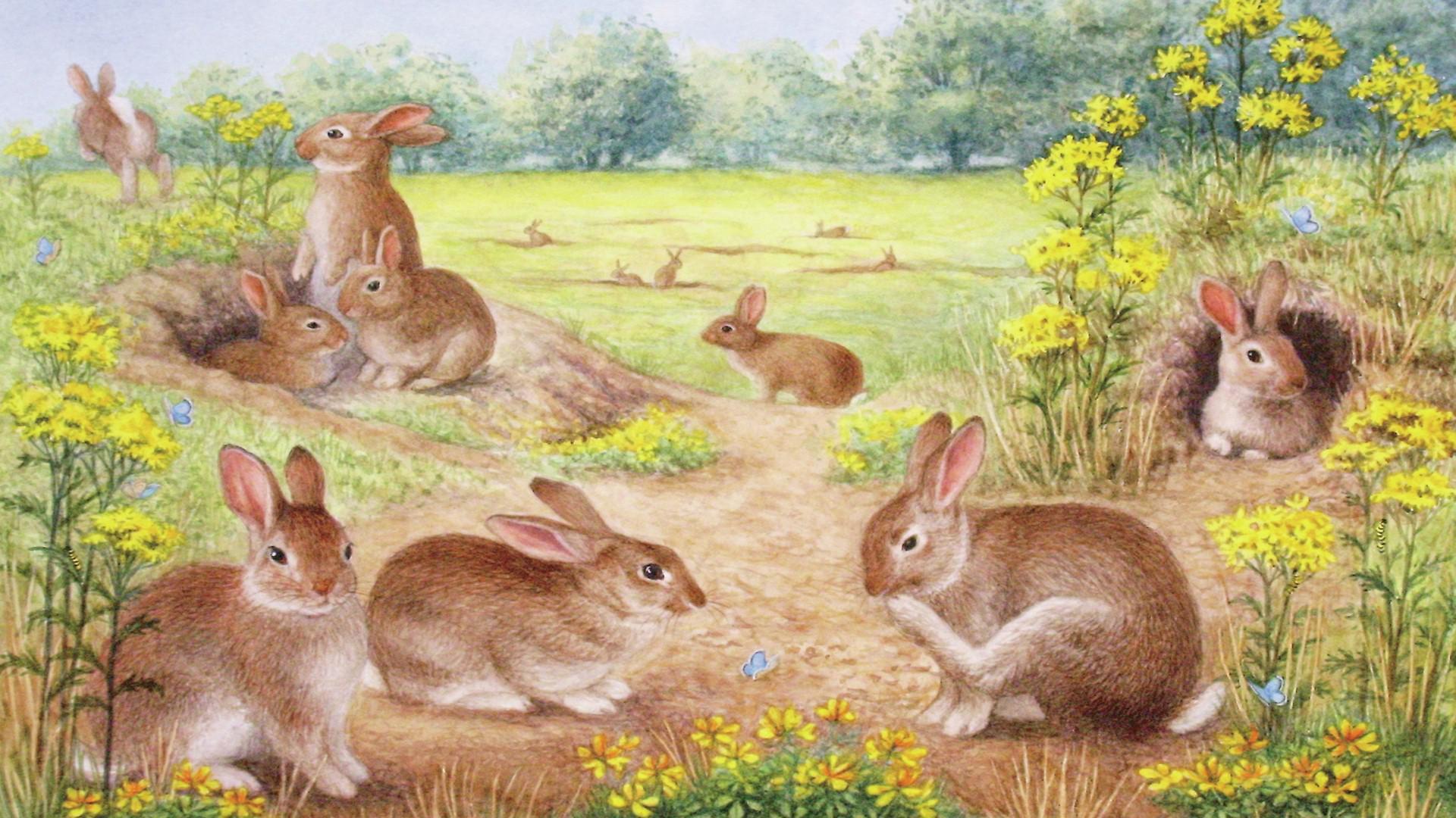 Rabbits Wallpapers