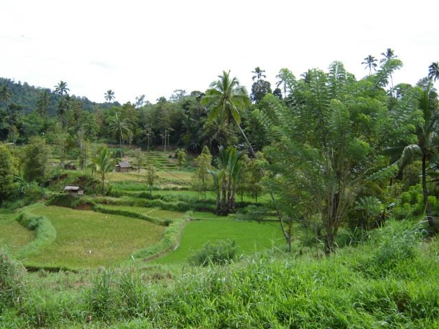 Daerah pertanian di Minahasa