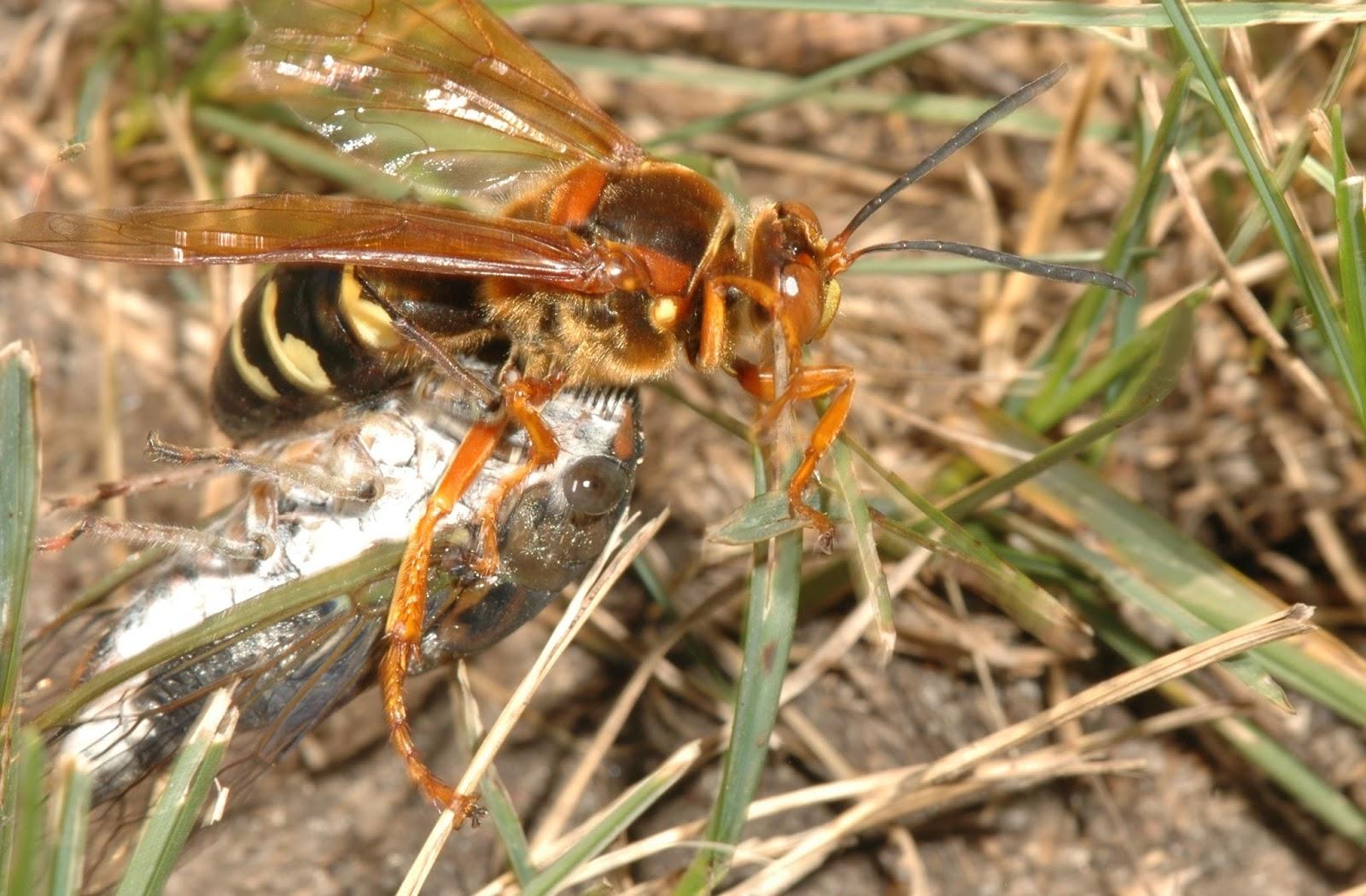 wasp nest in ground - 1200×630
