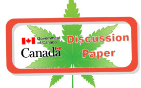 Who would write a short essay about legalizing marijuana in canada? containg these things:?