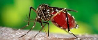 sivrisinekten kurtulma yolları