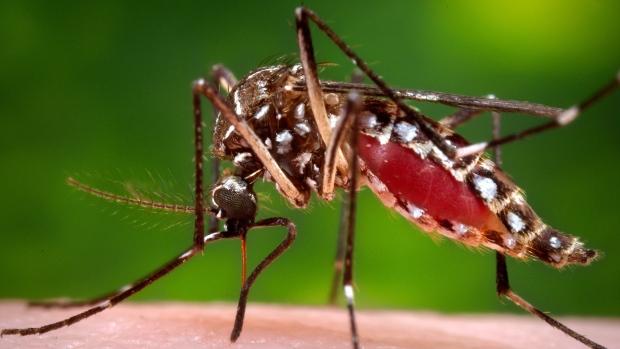 Zika por transmissão sexual é o primeiro caso no Texas, confirma CDC