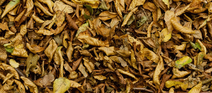 Fallen leaves decay to fertilize trees