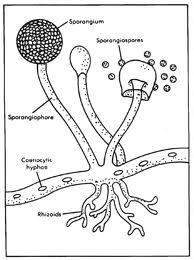 Ulangan Harian Jamur Fungi Biologi