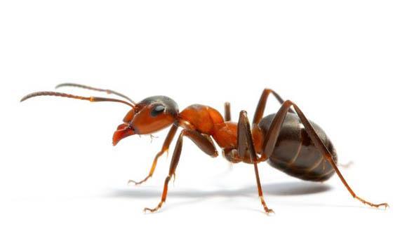 Kisah Nabi Sulaiman dan Semut