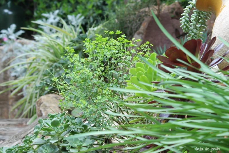 Euphorbia, una silvestre que introduje en mi jardín