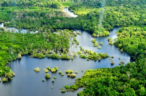 Aerial view of the Amazon rainforest near Manaus, the capital of the Brazilian state of Amazonas, Brazil. (Credit: CIFOR/Flickr) Click to enlarge.