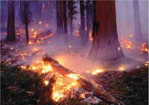 #PraCegoVer: Fogo devorando árvores centenárias e a fumaça cobrindo de nuvem escura a terra.