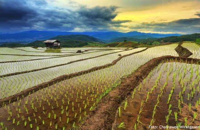 Lahan Pertanian dan Swasembada Pangan