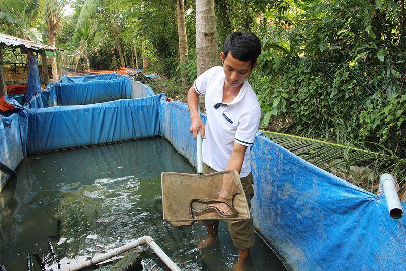 Budidaya Ikan Belut Di Kolam Terpal - InfoAkuakultur.com