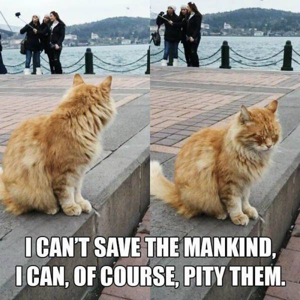 30 Funny animal captions - part 46, animal pictures with captions, funny animals, best captioned pictures
