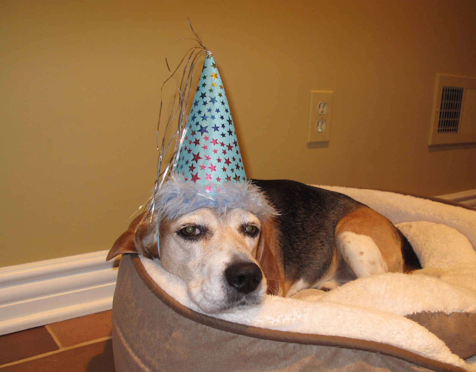For the Love of Beagles!: Happy Birthday Jude!!!