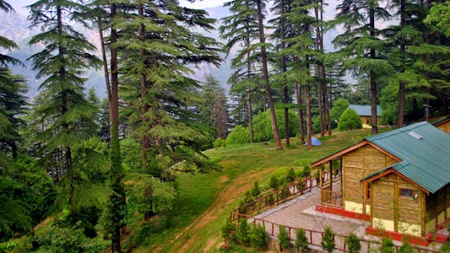 dhanaulti,mussoorie to dhanaulti,dhanaulti uttarakhand,dhanaulti hotels,dhanolti,camping in dhanaulti,dhanaulti hill station,dhanaulti trip,road to dhanaulti,dhanaulti weather,camps in dhanaulti,journey to dhanaulti,dhanaulti mussoorie,trip to dhanaulti,dhanaulti eco park,places to visit in dhanaulti,mussoorie,dhanaulti to mussoorie very dangerous and adventurous hilly road,#dhanaulti,dhanaulti vlog,dhanaulti drive,dehradun