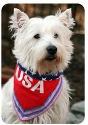 ceeee1320 Honor a military veteran and active duty service personnel this Memorial  Day by dressing your dog in patriotic clothing and accessories from thePosh  Puppy ...