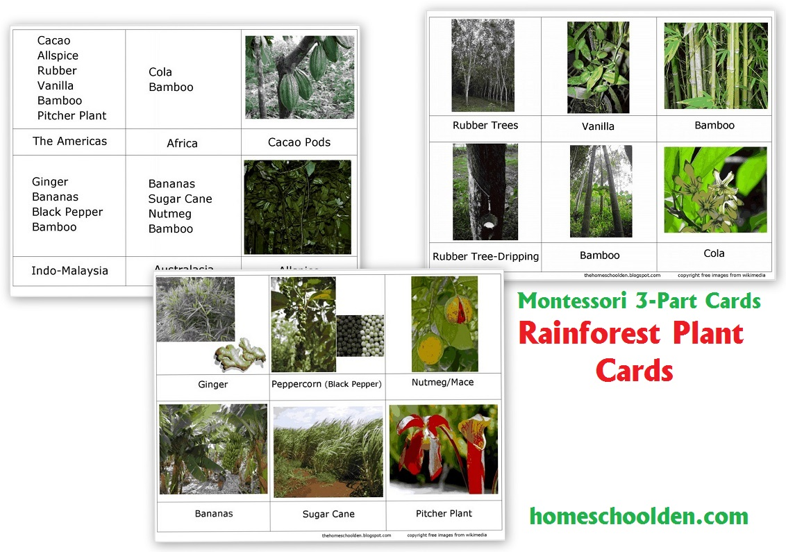 Rainforest Worksheets Free