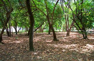 Parque das Dunas Natal