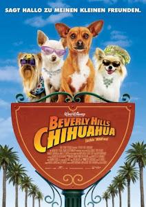 Những Chú Chó Chihuahua Ở Đồi Beverly 1