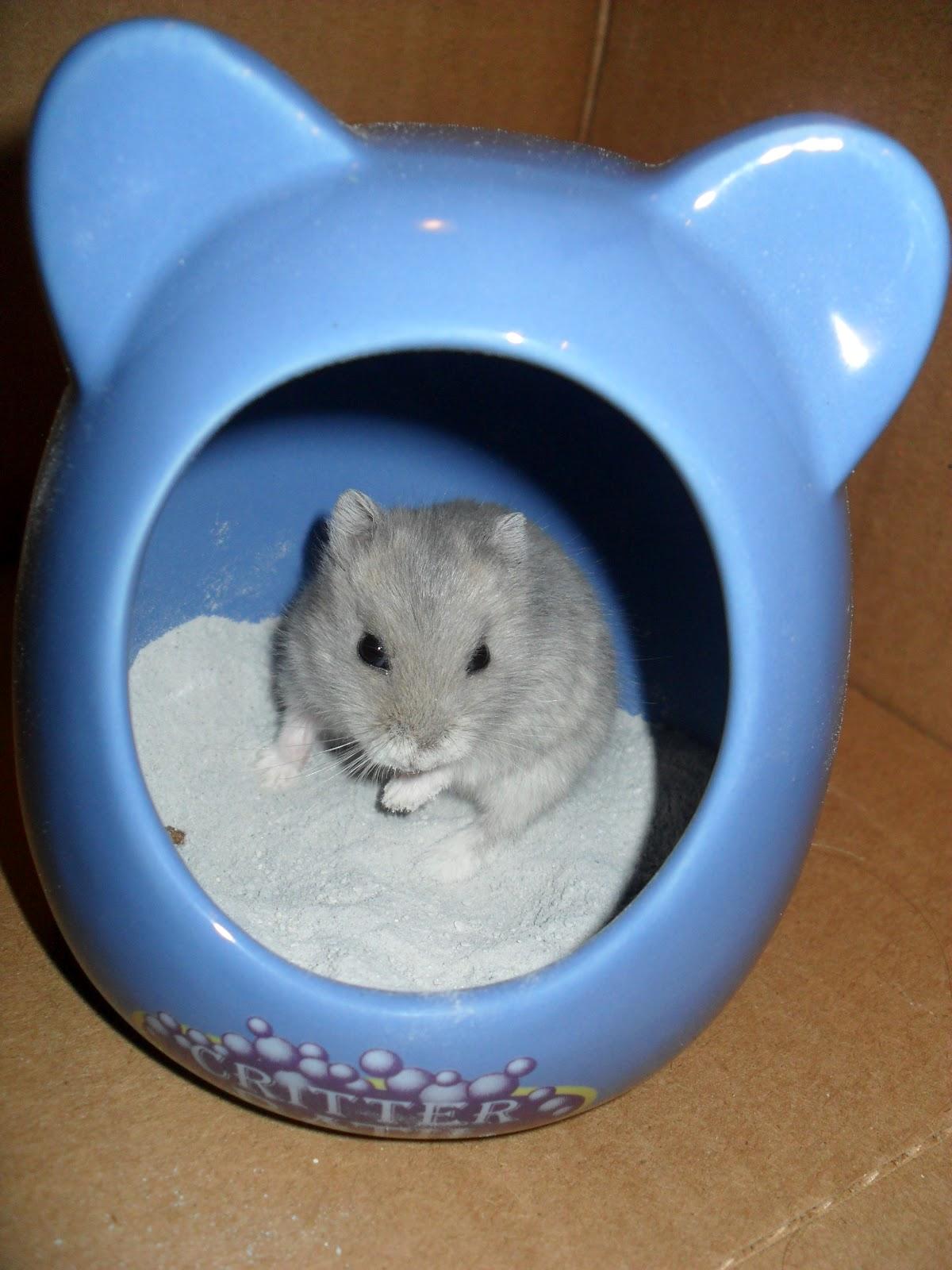 Hamster Talk New Name First Bath