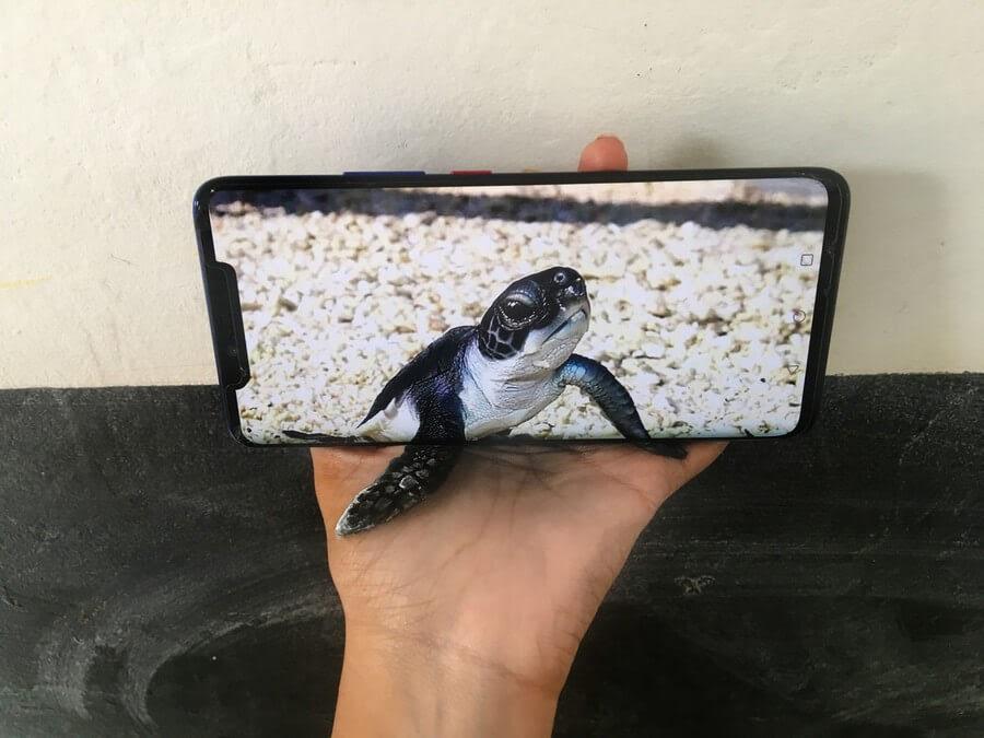 06-Baby-Sea-Turtle-Iantha-Naicker-3D-Art-www-designstack-co