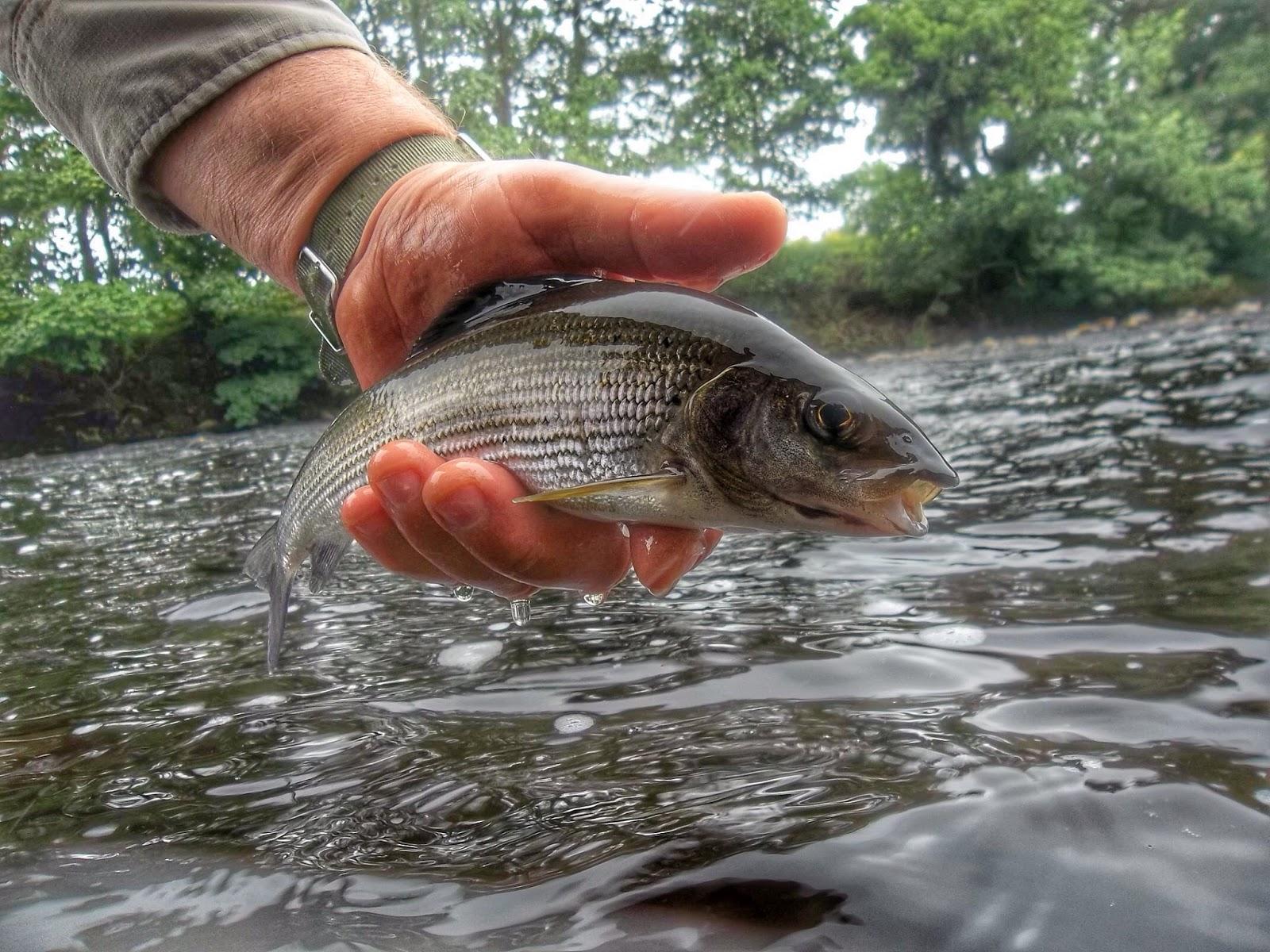 The flee float like it or loathe it lets go fishing for Fish 2 flirt